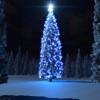 Kerstboom en Verdwenen Miljarden ABP